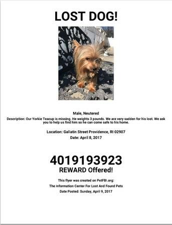 Favorite This Post Lost Teacup Yorkie Gallatin St Hide This