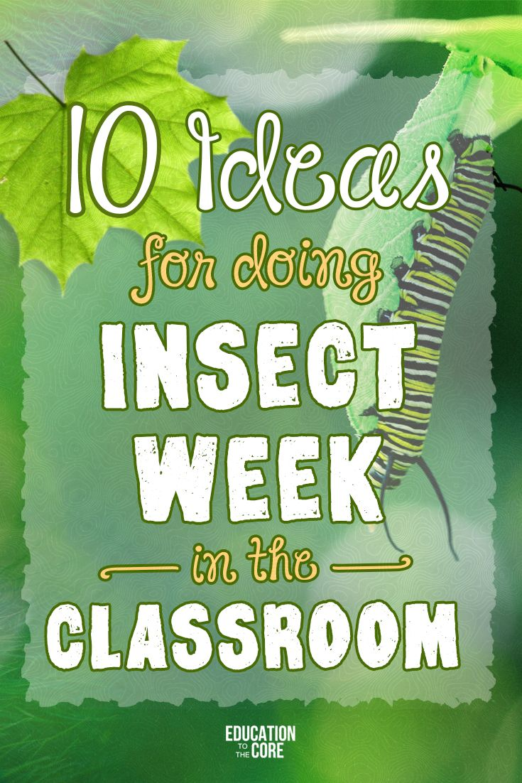 Doing Insect Week in the Classroom | Education to the Core