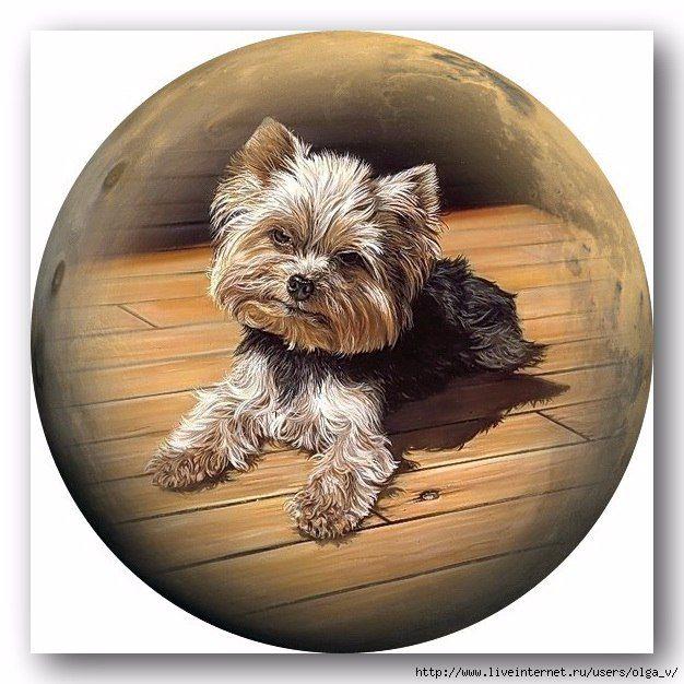 уходят круглые картинки собак условие пальто