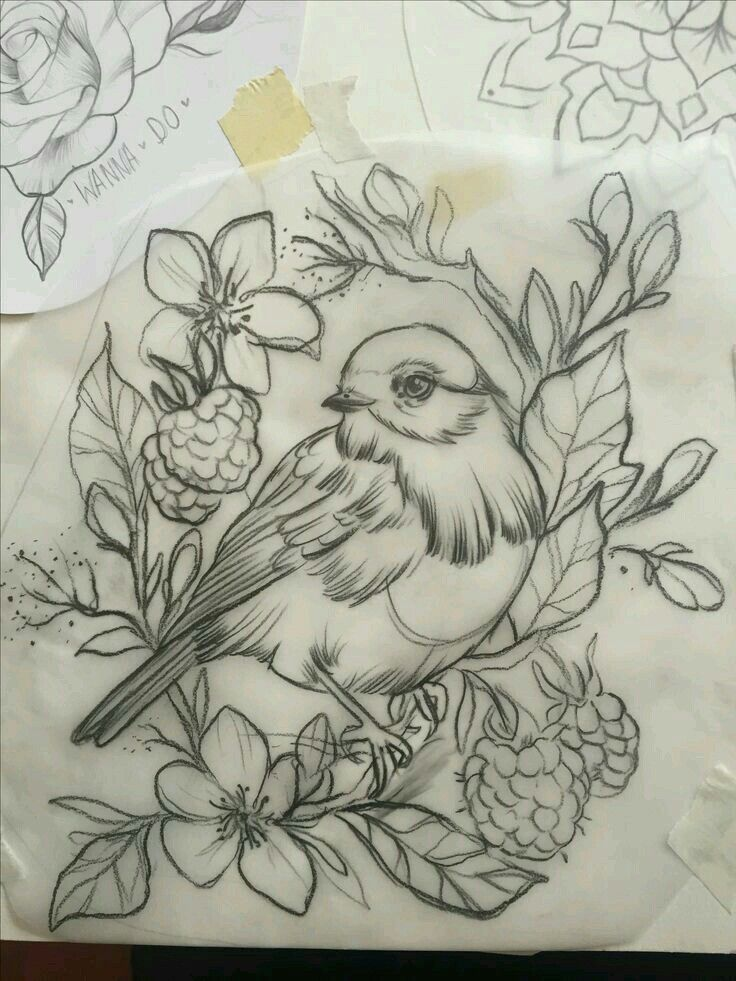 Bird Tattoo Bird Tattoo Pajaros Pajaro Boceto Dibujo Ilustracion Arte Artistic Flores Flowers Plan Bird Drawings Robin Bird Tattoos Tattoo Drawings