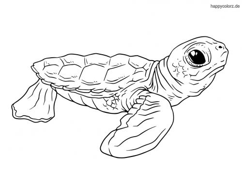 schildkrötenbaby ausmalen  zootiere kleine schildkröten