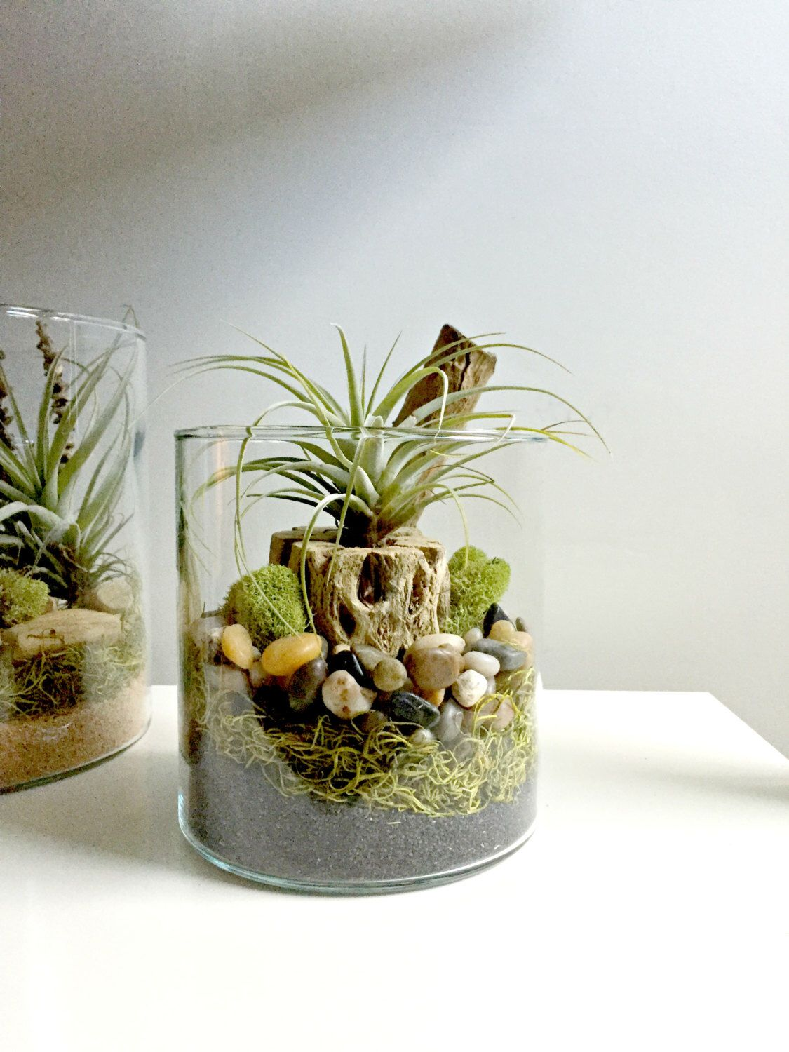 Air plant terrarium - glass vase Living decor DIY kit - gift for any  occasion-