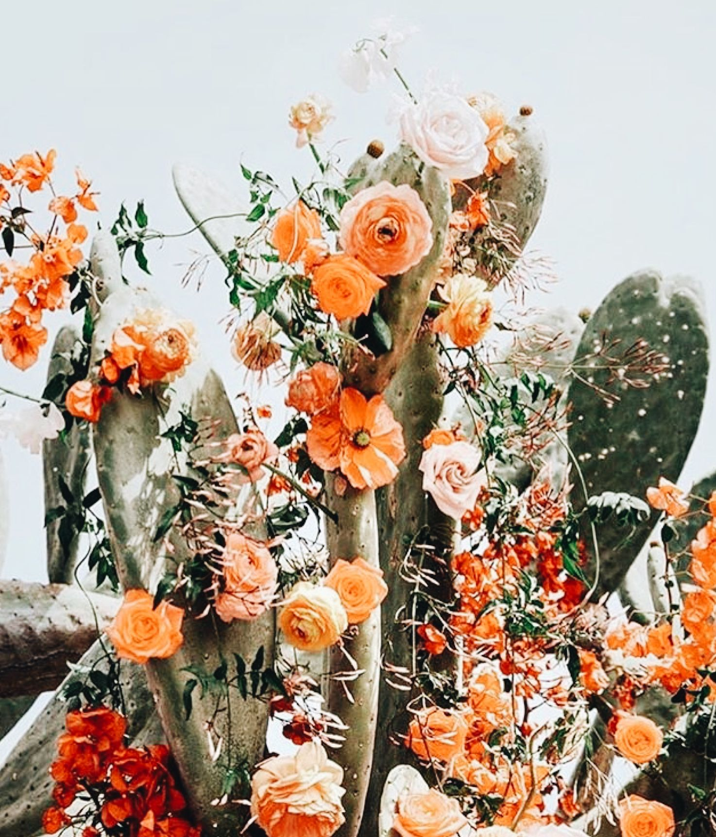 Pin by maddy on f l o w e r s pinterest plants flowers and flora