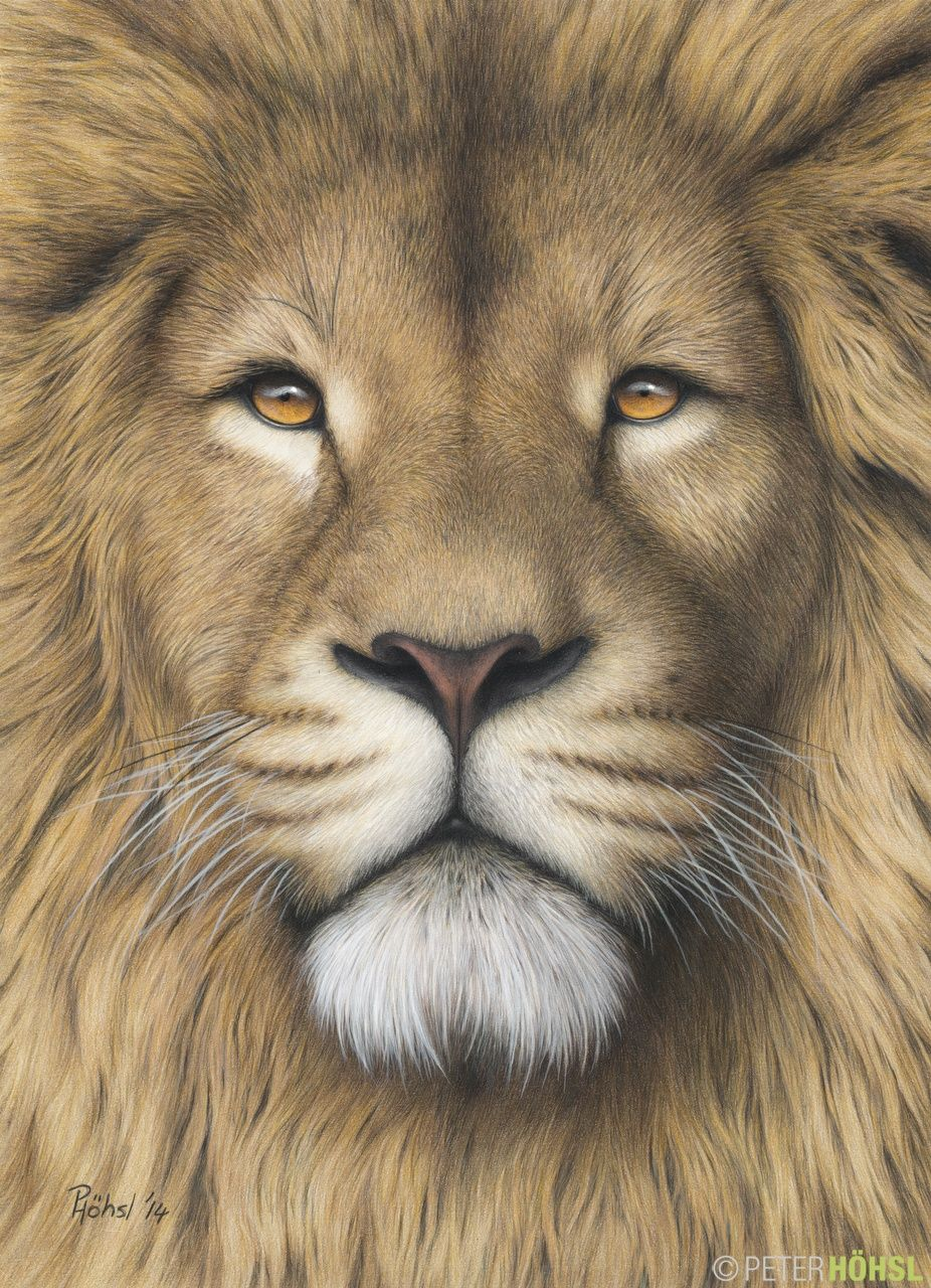 Leo 29cm X 40cm Colored Pencil Ojos De Animales Leones