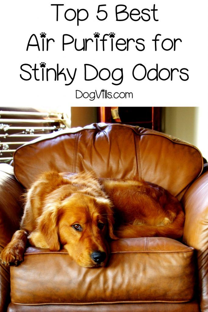 Do air purifiers really work for dog odors? Find out the