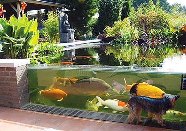 Outdoor aquarium design 1000 aquarium ideas for Koi pond labradors