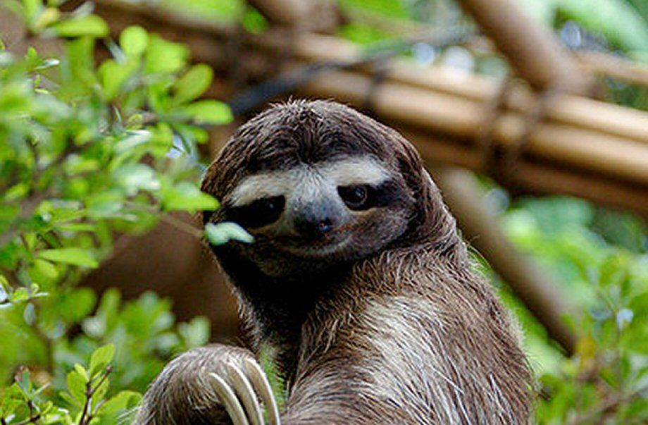 stop it your making me blush said sassy the sloth