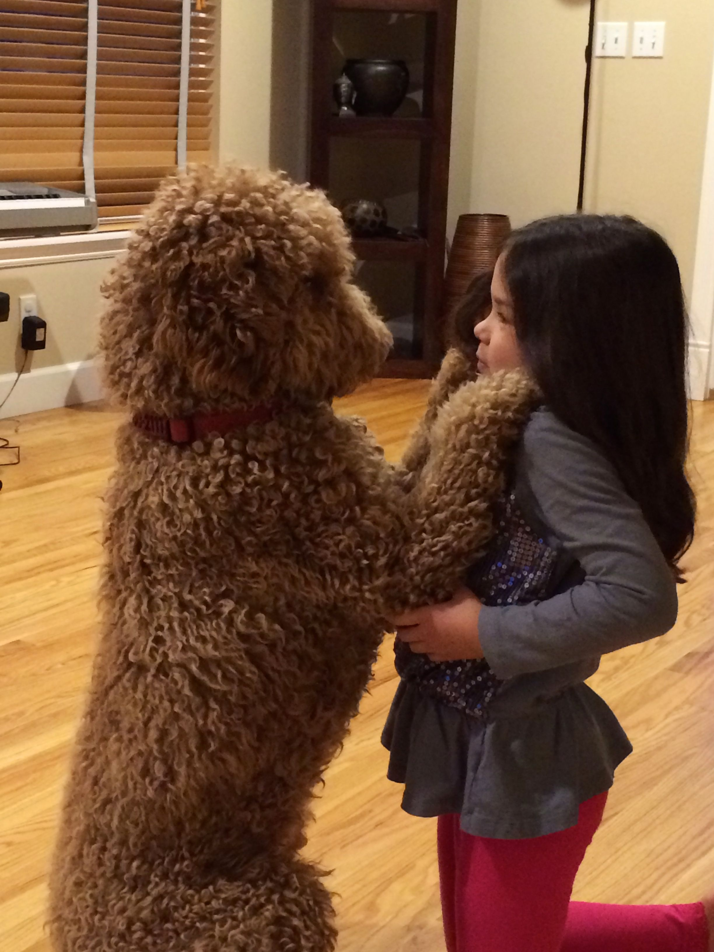 Goldendoodles Are Great With Children Bonus Goldendoodle