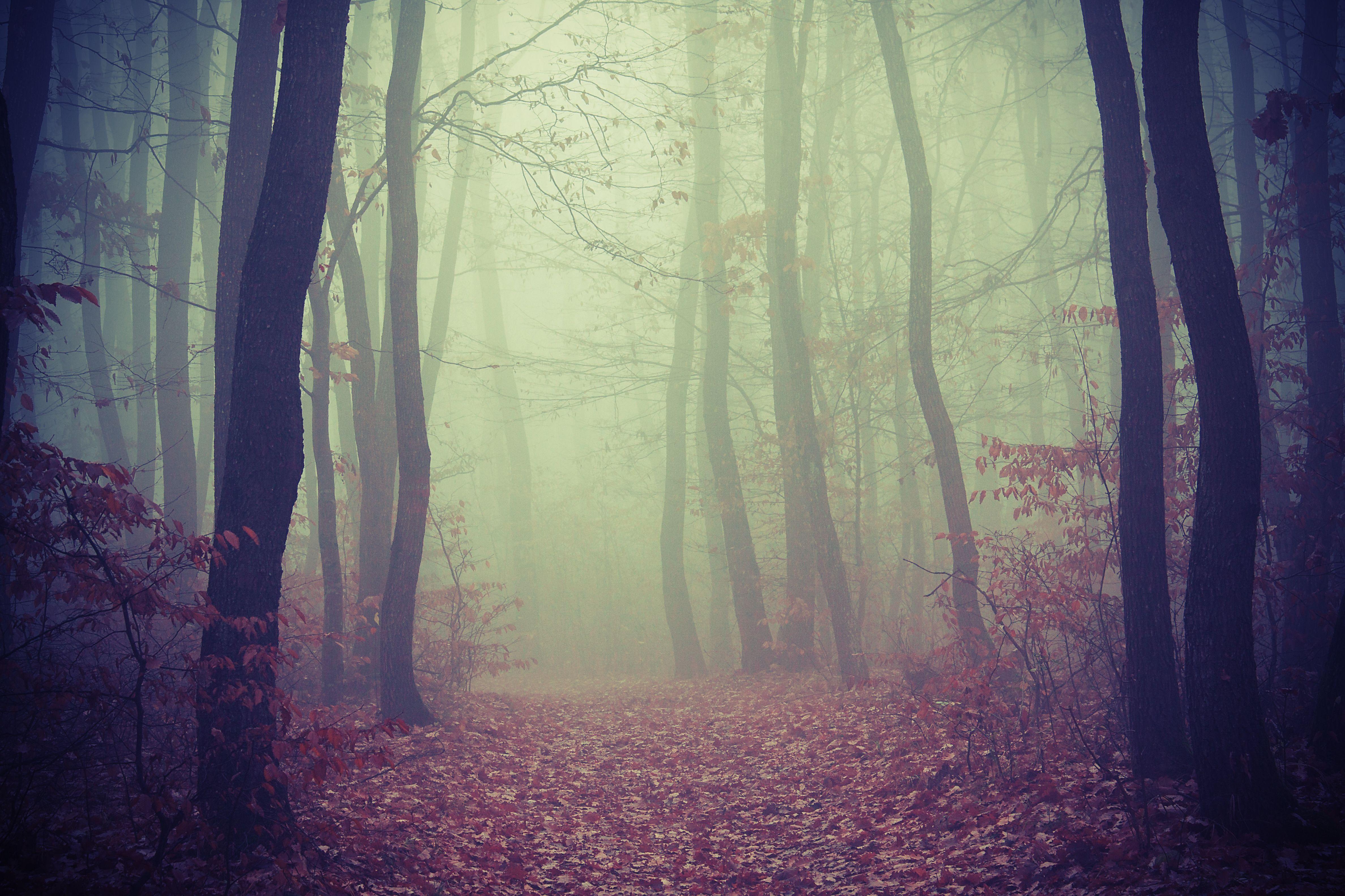 Scaricare Gli Sfondi Foresta Alberi Nebbia Sfondi Gratis Per La Risoluzione Del Desktop 4752x3168 Immagine 561633 Sfondi Paesaggi Fotografia Di Autunno