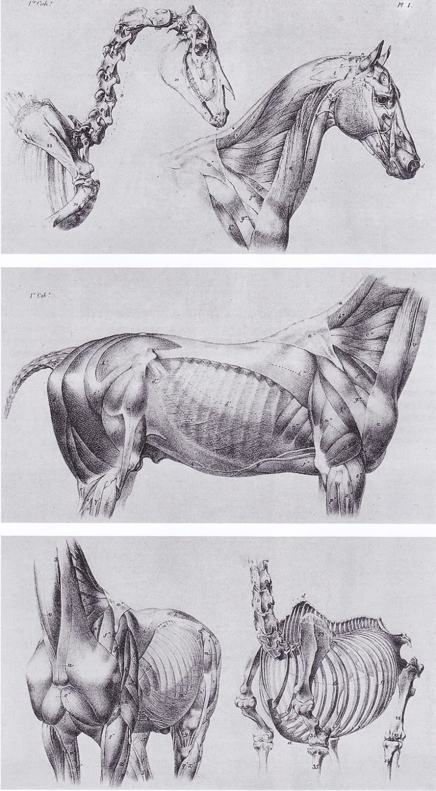 Anatoref Horse Anatomy Horse Anatomy Anatomy Art Anatomy For Artists