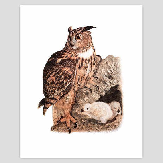 Printable Owl Print, Birds Nest Art (Victorian Downloadable Natural
