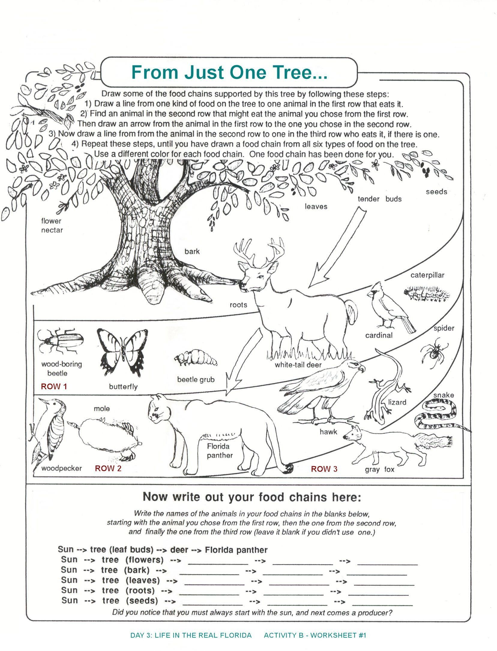 Producers And Consumers Worksheet Florida Food Chain Worksheet From Just One Tree With Science Worksheets Food Chain Biology Worksheet