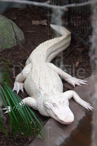 Pin By Stockfuel On Stock Images And Photos Albino Animals Animals Wild Rare Albino Animals