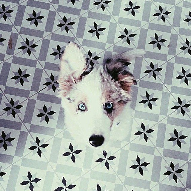 #vives #vivesceramica #azulejos #tiles #carrelage #fliesen #floor #dog #trendceramics #amantesdelosazulejos #iliketiles #ilovetiles #design #decoration #architecture