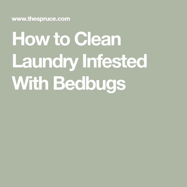 How to Wash Laundry Infested With Bedbugs | Bed bugs ...