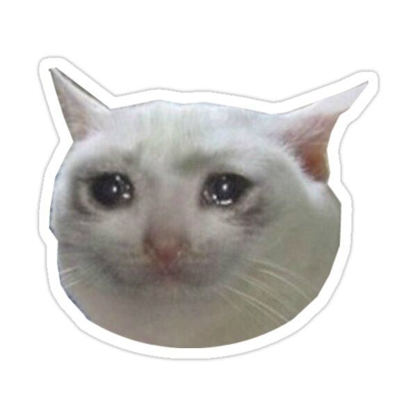 Crying Polite Cat Crying Cat Funny Cat Faces Cat Crying Cute Baby Animals