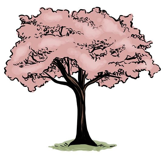 How To Draw A Cherry Tree Blossoms Art Cherry Blossom Art Tree Drawing
