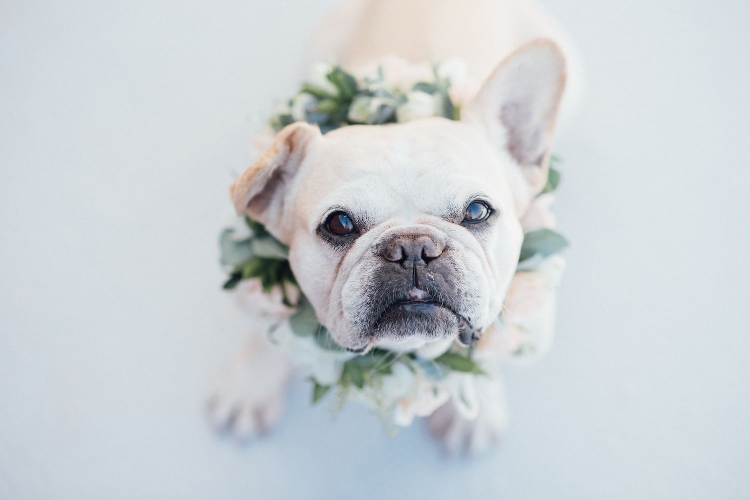 Pin On Frenchie Frenchton Love