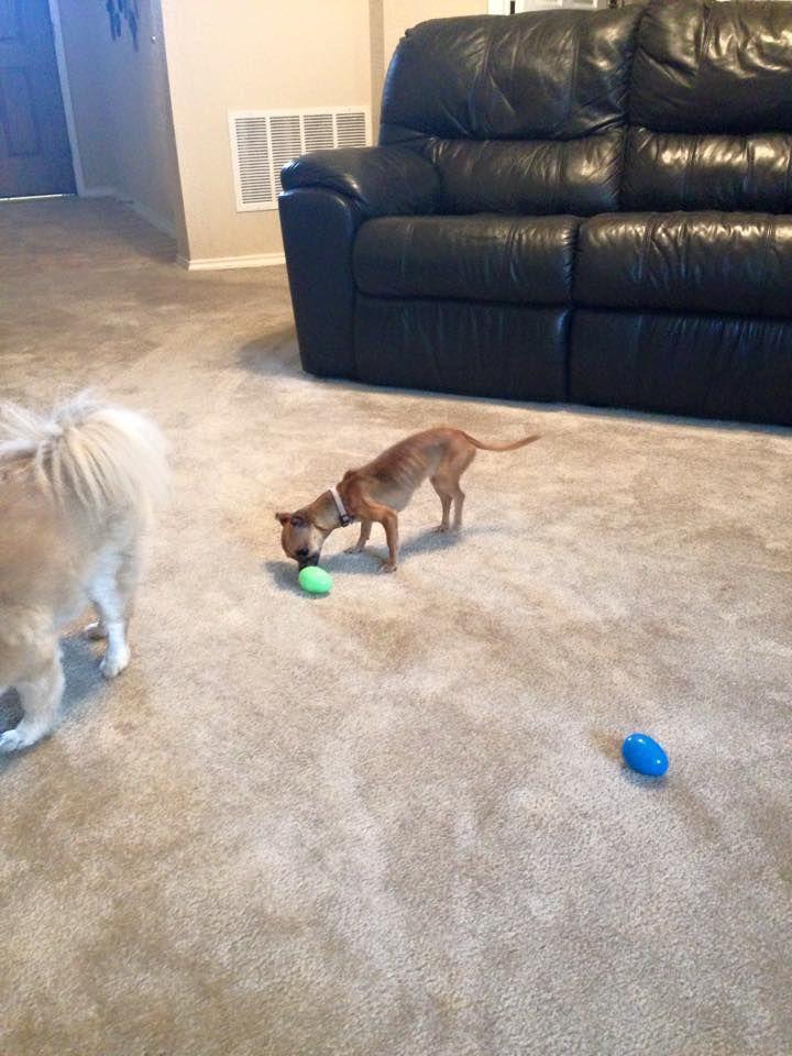 Gwen Easter Egg Hunting Taken By Sitter Melanie Love Your Pet Your Pet Dog Walking