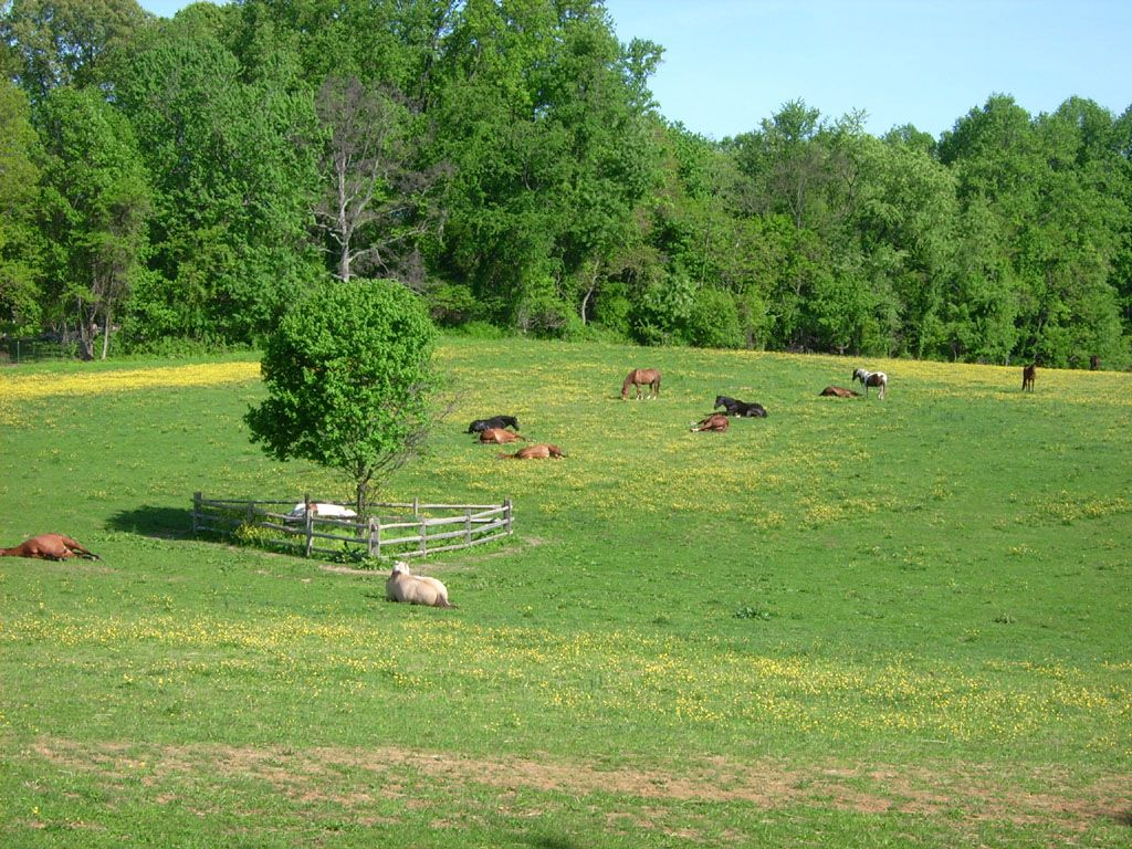 geldings only Haydown Farm provides an exceptional place to