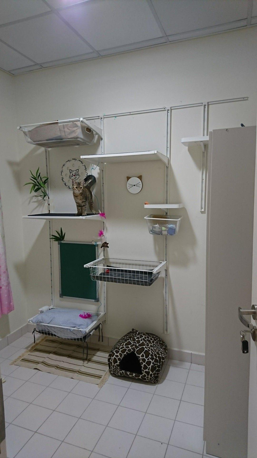 Cat wall from Ikea algot series. ikeahack catwall Ikea