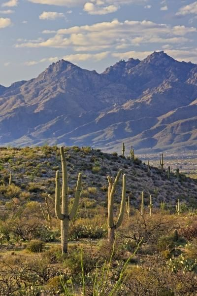 Rincon Mountain range and landscape in Saguaro National Park