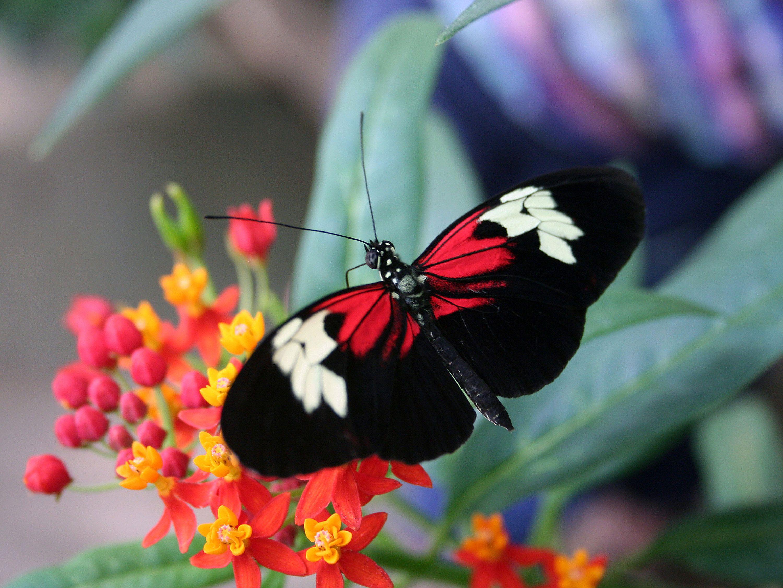 rainforest butterfly wallpaper - photo #6