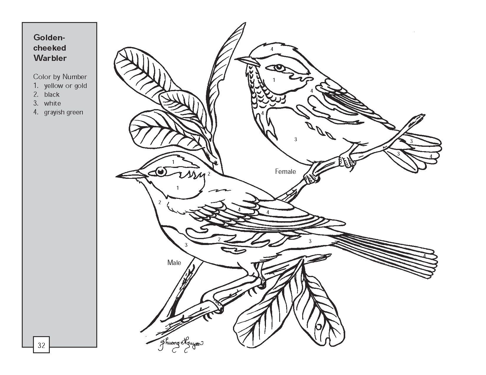 The number four colouring pages page 3 - Butterfly Drawings In Color Texas Warbler Bird Color By Number Worksheets