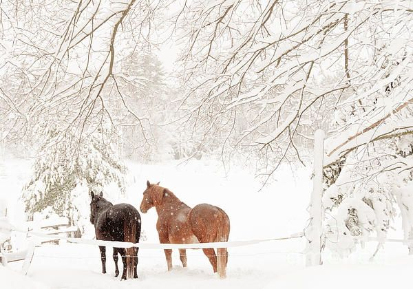 http://fineartamerica.com/featured/country-snow-cheryl-baxter.html