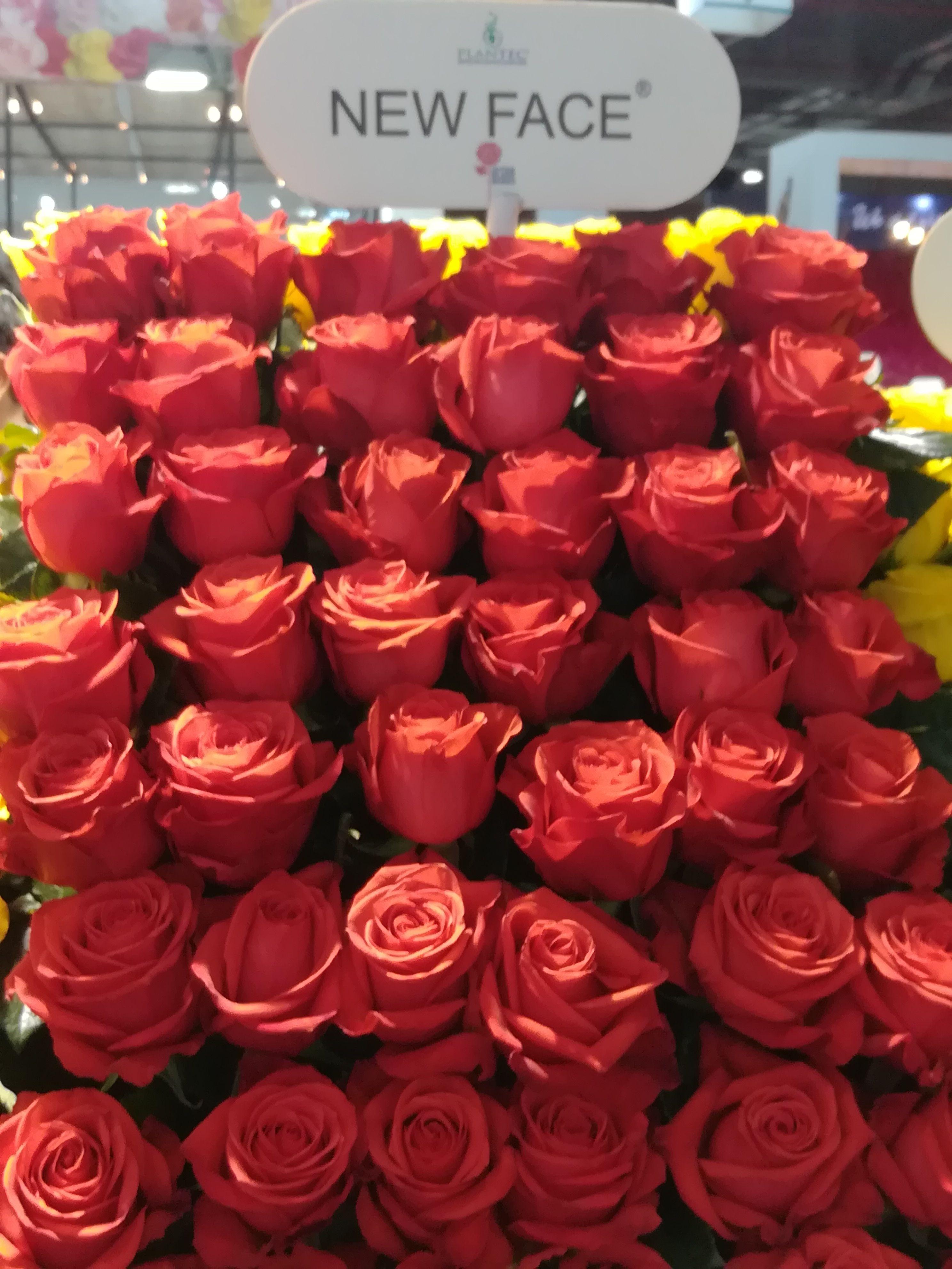 Where to Buy Bulk Flowers Online for Your Wedding Roses