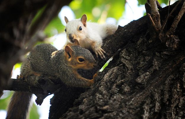 A White Squirrel Chilling With His Bro With Images Animals