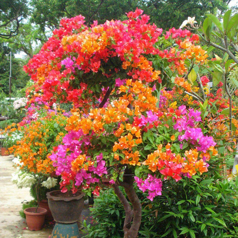 Garden Flowers And Shrubs