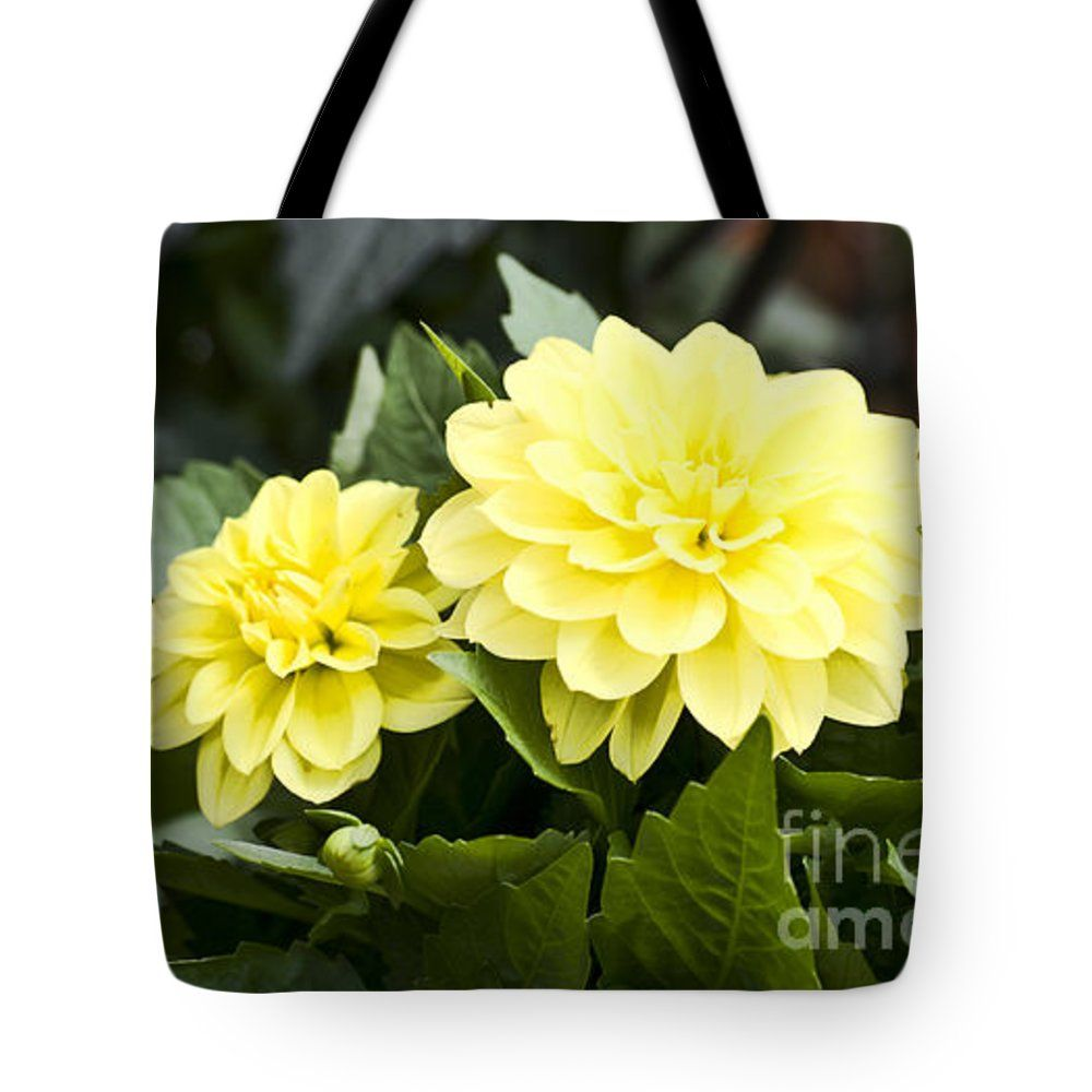 "Mellow Yellow Tote Bag by Flamingo Graphix John Ellis (18"" x 18"").  The tote bag is machine washable, available in three different sizes, and includes a black strap for easy carrying on your shoulder.  All totes are available for worldwide shipping and include a money-back guarantee."