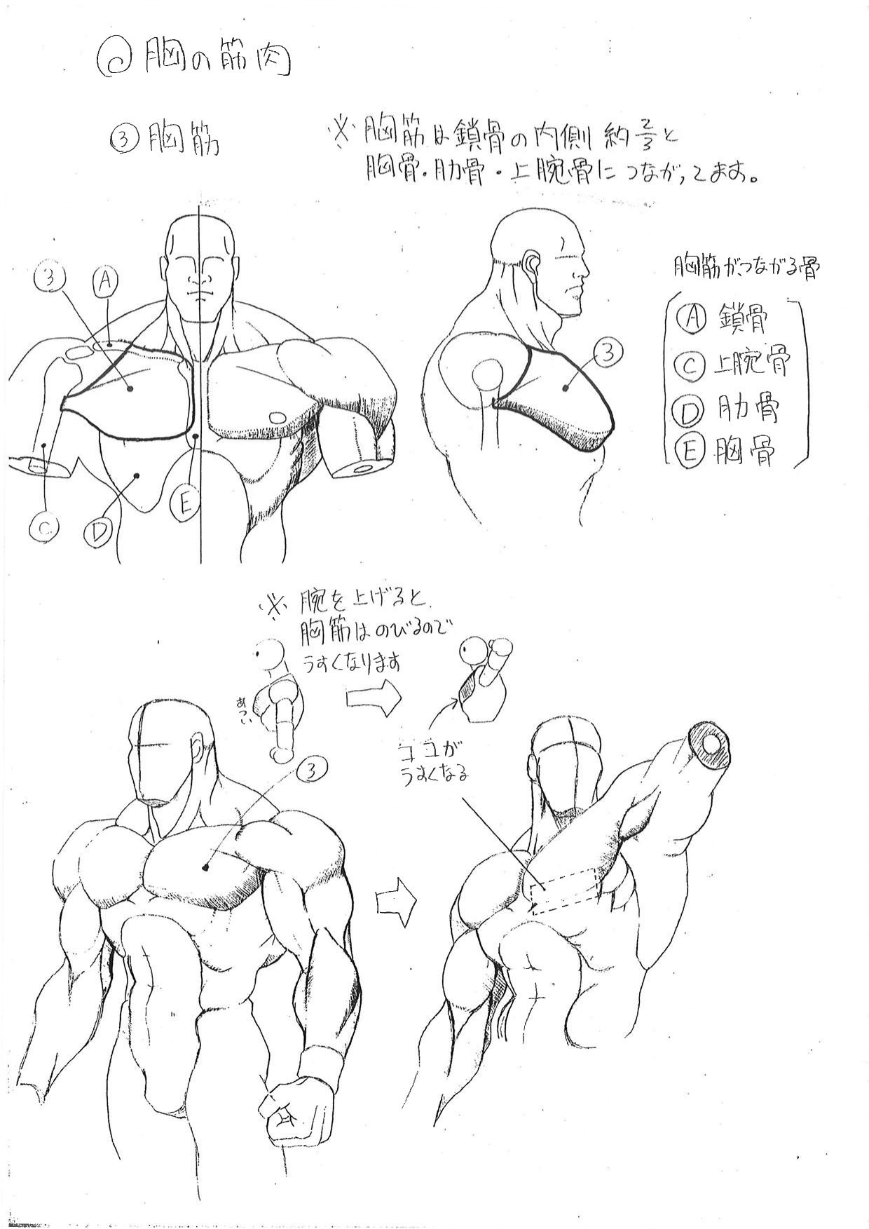 Capcom\'s Human Anatomical Reference For Artists | Learn Some Shit ...
