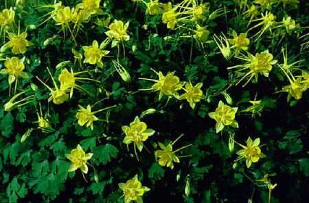 Perennial plants for south texas landscapes from am website san perennial plants for south texas landscapes from am website mightylinksfo