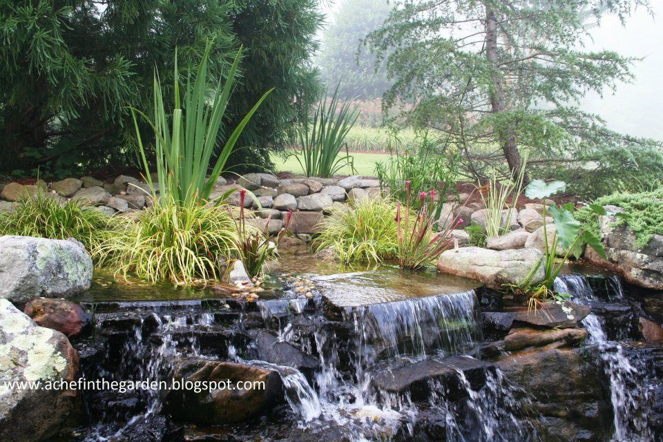 The Bog Garden Bog Garden Backyard Garden Home Landscaping