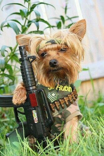Pin By Ruben Jimenez On Yorkie Poo Yorkie Dogs Puppies
