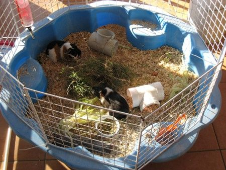 Pin On Guinea Pig Housing