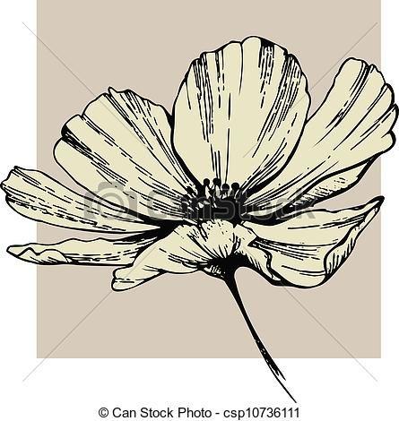 Cosmos Flower Csp10736111 Ilustraciones Florales Arte En Lienzo Tulipanes De Color Rosa