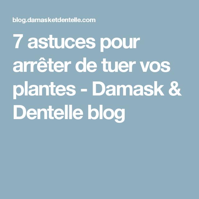 7 astuces pour arrêter de tuer vos plantes - Damask & Dentelle blog