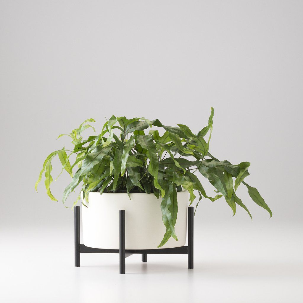 Good Case Study Tabletop Planter