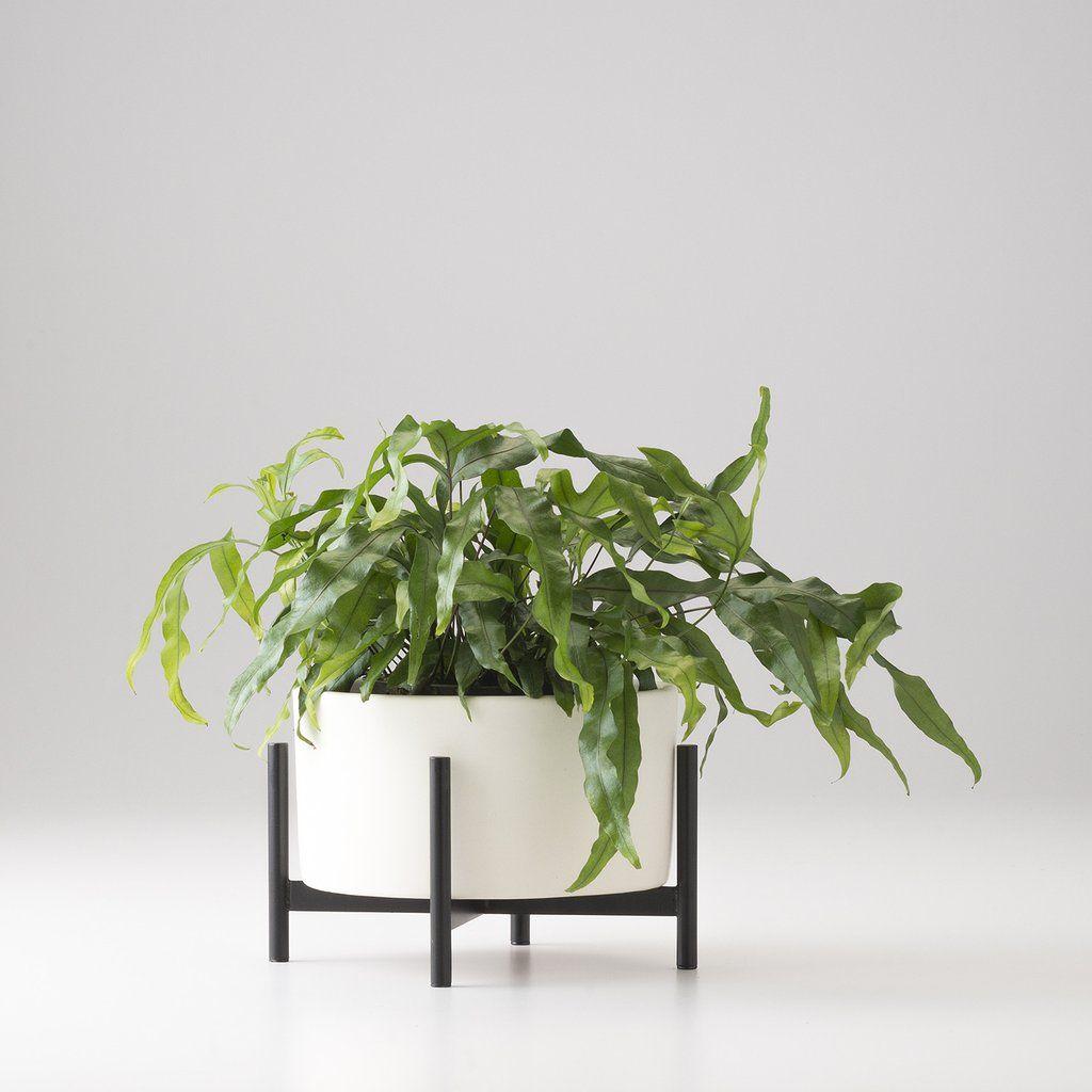 Good Case Study Tabletop Planter