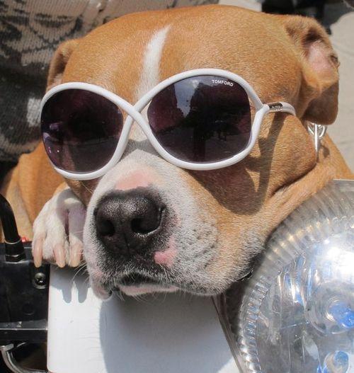 Lentes Memes Divertidos Humor Divertido Sobre Animales Memes De Perros Chistosos