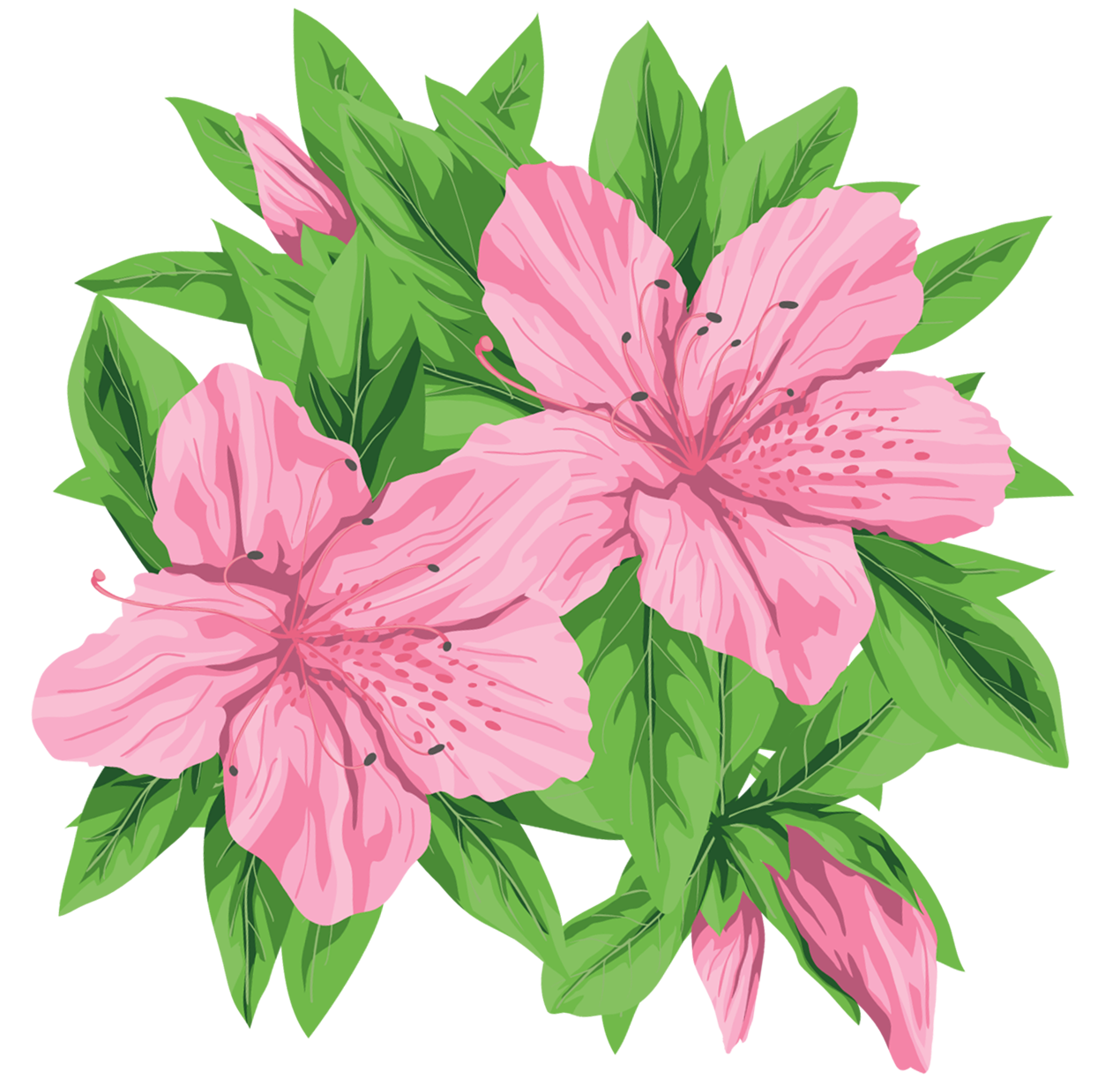 Pink Flowers PNG ClipArt Image ดอกไม้