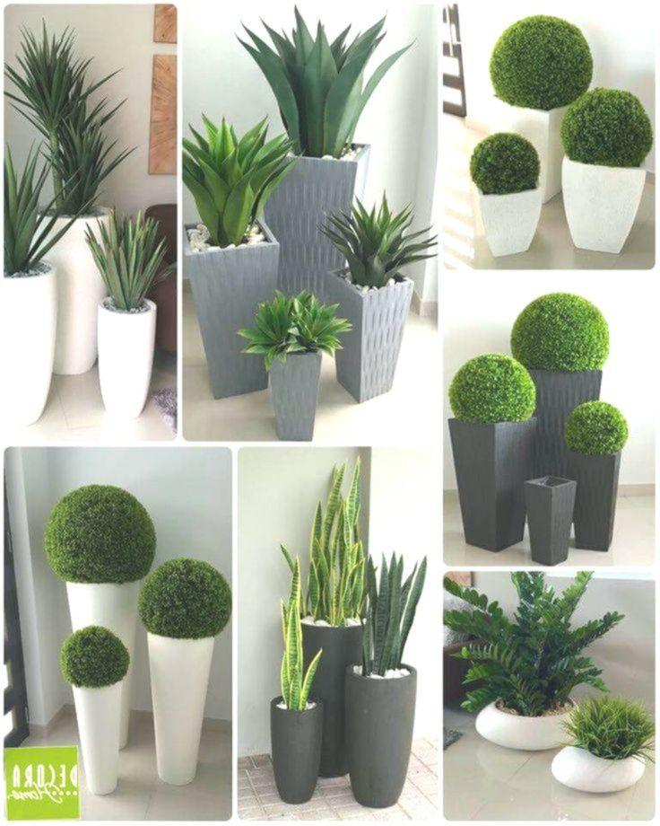 piante Idee di giardinaggio, Arredare con le piante da
