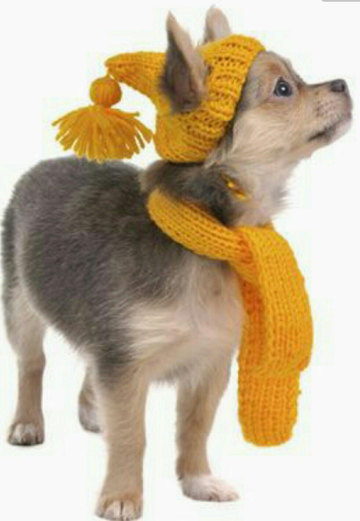 Pin de Monik Yanguas en Ropa Suéteres para perros