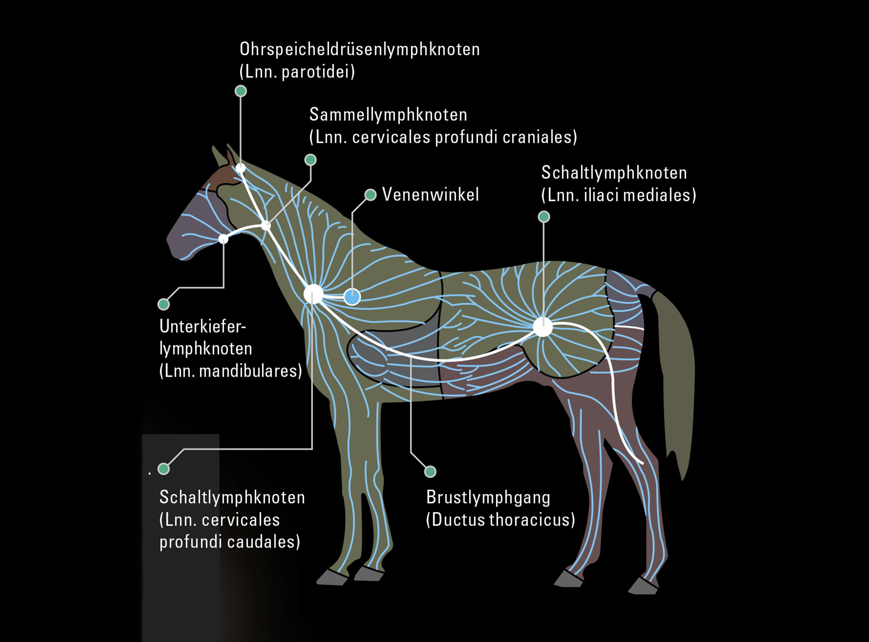 stallion wiring diagram wiring diagram third levelstallion wiring diagram wiring library car wiring diagrams lymfen horse anatomy, horseback riding, horse