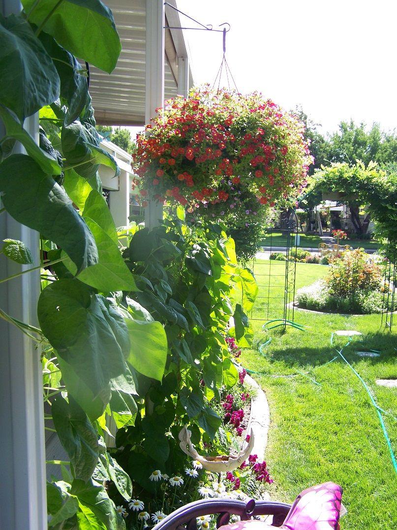 toward wisteria arch Plants, Wisteria, Garden
