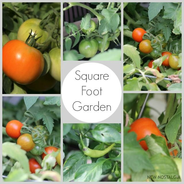 Square foot gardening is one of the BEST projects I have ever done. I cannot tell you how much joy it is to grow fresh herbs and vegetables with minimal amount of work! I have two...