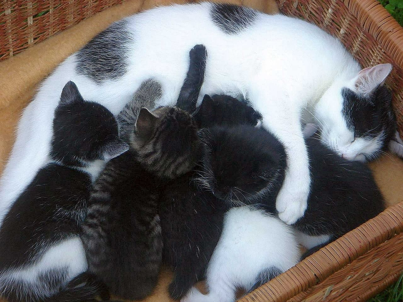 What To Expect When Your Cat Is Expecting The Conscious Cat Pregnant Cat Cat Having Kittens Cat Care